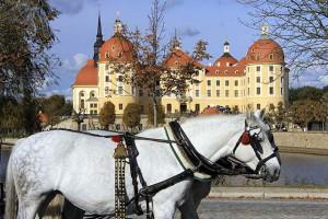 schloss-moritzburg-in-sachsen-mit-pferdekutsche