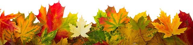 Blätter im Ilmpark